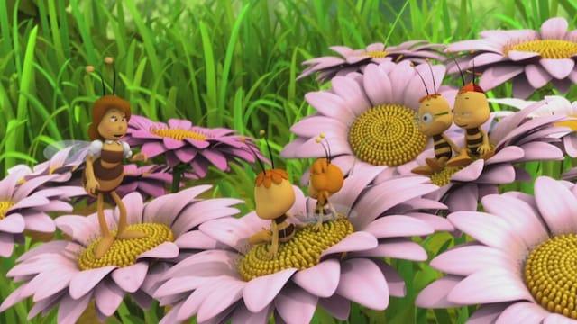 35. Kiltti ampiainen