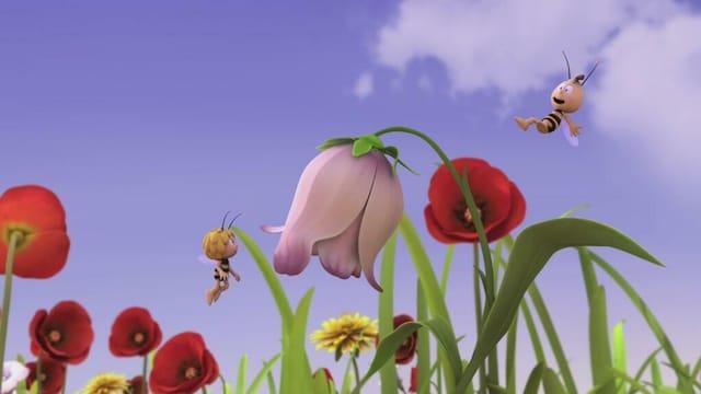 69. Kisa kukasta