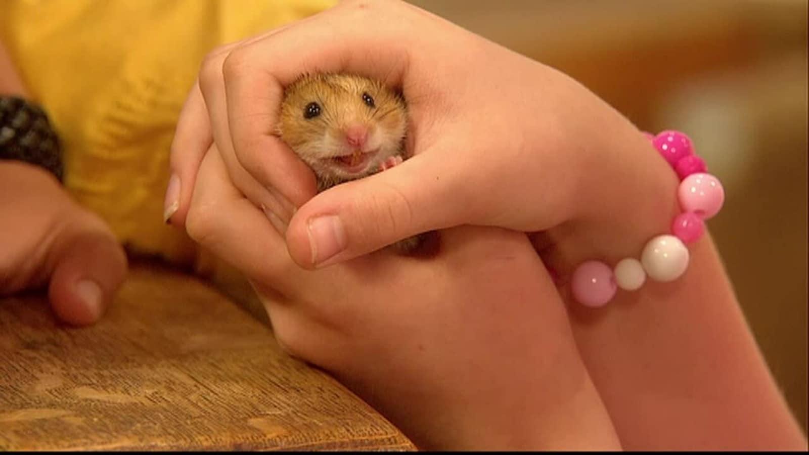 2. Hamsterin etsintää