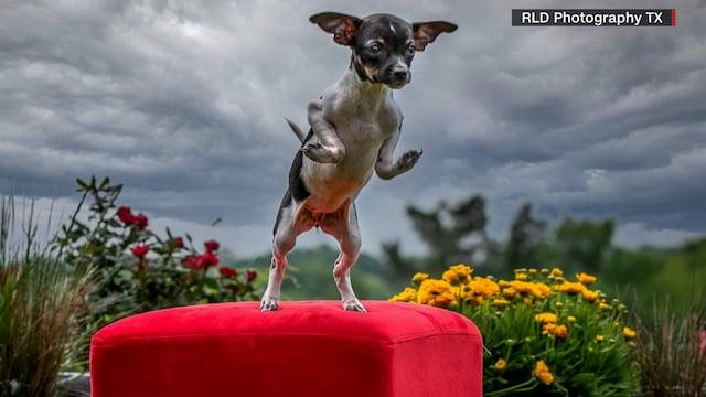 Lifestyle, Harvinaisen synnynnäisen vian takia koiranpentu syntyi tassut kirjaimellisesti väärin päin
