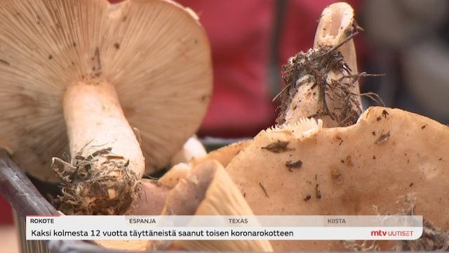 Uutisjutut: Kotimaa, Suomen Sieniseura ja luonnontieteellinen museo järjestivät viikonloppuna sienineuvontaa, jossa tarjottiin apua sienien tunnistamiseen