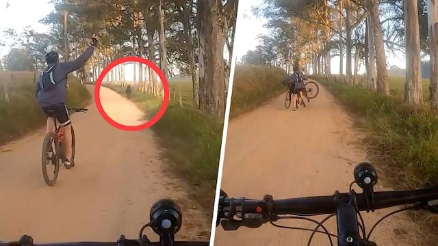 Uutisklipit, Pyöräilijä lähti naureskellen häätämään tiellä olevaa lehmää – videolle tallentui kivulias törmäys