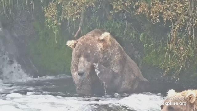 Kevennys 7.10.2021, Alaskassa on meneillään karhujen juhlaviikko