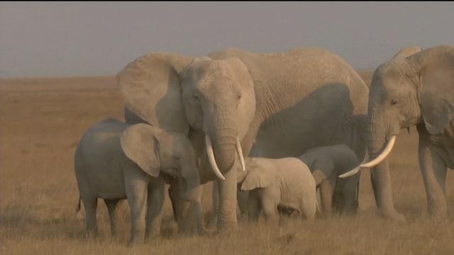 Uutisjutut: Ulkomaat, Miljoonaa lajia uhkaa sukupuutto – YK-kokous etsii keinoja luontokadon pysäyttämiseen