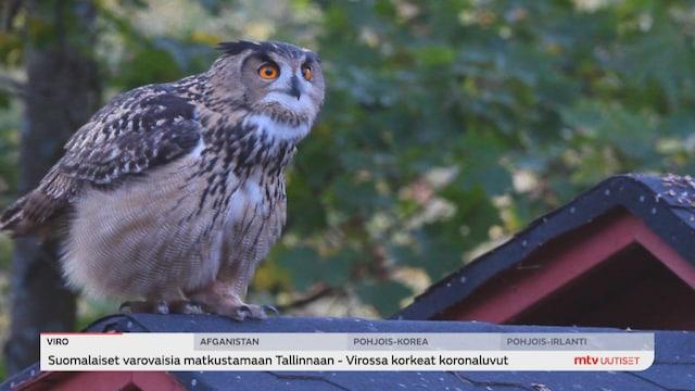 Uutisjutut: Kotimaa, Luontokato uhkaa myös Suomea - joka yhdeksäs laji on jo uhanalainen